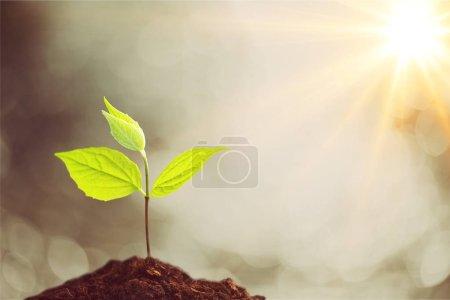 Photo pour Plante verte dans le sol, vue rapprochée - image libre de droit