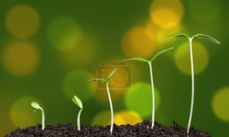 Growth of new life, plants in soil