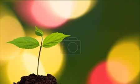Green plant in soil, close-up view