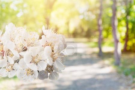 Spring blossom flowers close-up view