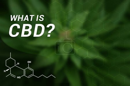 Photo for What is CBD? | CBD Cannabidiol | Medical Marijuana | Cannabis - Royalty Free Image