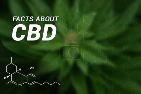 Photo for Facts about CBD | CBD Cannabidiol | Medical Marijuana - Royalty Free Image