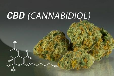 Photo for CBD | Cannabidiol | Medical Marijuana | Cannabis - Royalty Free Image