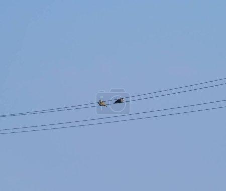 Photo pour Deux tourterelles sur les fils. Une paire de pigeons sur les lignes électriques . - image libre de droit