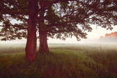 panorama under old oak trees at misty foggy summer morning in vintage style