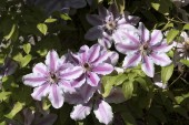 Summer flowers in an English garden UK