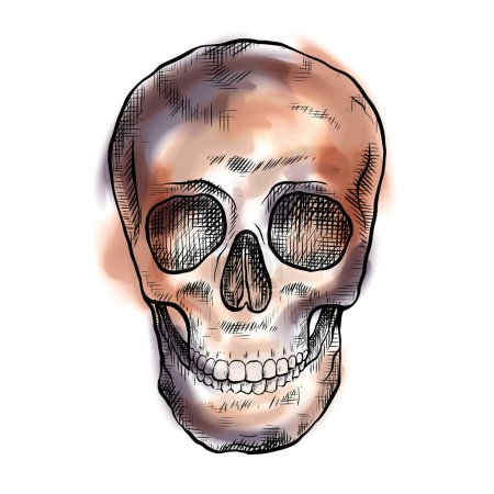 Illustration for Drawing of a human skull with hatching and watercolor color strokes. Front view. Mystical drawing. Vector element for medical articles, holiday invitations and your design. - Royalty Free Image