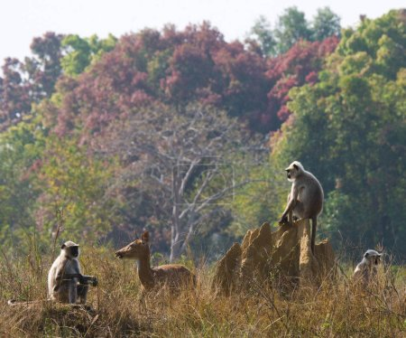 Langur monkeys sitting on termite mound