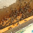 Busy bees, close up view of the working bees on ho...