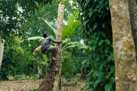 African-american man taking coconut from palm tree