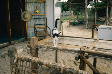 Homeless black and white cat standing on wooden table