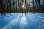Winter polish forest