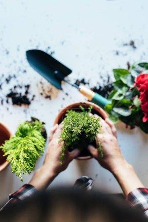 Photo pour Femme mains plante transplanter un dans un pot neuf. - image libre de droit