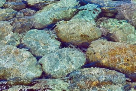 sea stones under water at the shore