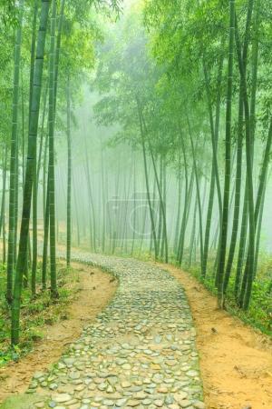 Photo pour Plein air belle forêt de bambous - image libre de droit