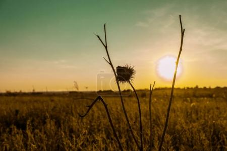 tree branches with thorn in field