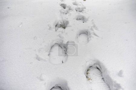 Photo pour Empreintes de pas dans la neige. Empreintes de pas sur la première neige. Empreinte des chaussures et empreintes animaux et oiseaux sur la neige . - image libre de droit