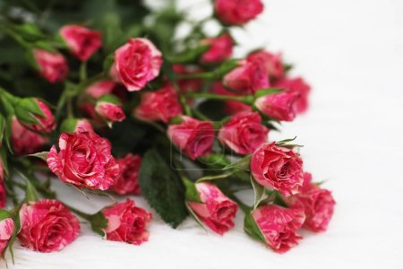 Photo for Bouquet of red roses on white background - Royalty Free Image