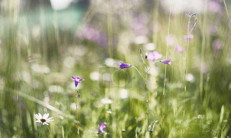Photo pour Le paysage est l'été. Arbres verts et l'herbe dans un paysage de campagne. Nature journée d'été. Feuilles des buissons. - image libre de droit