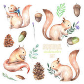 Collection, set of watercolor cute squirrels and forest elements