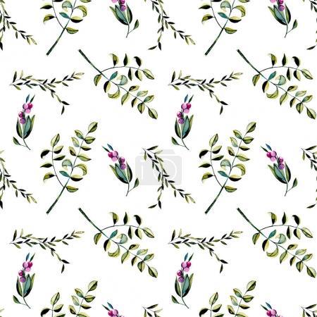 Foto de Patrón floral transparente con frutos color púrpura y ramas de acacia, dibujado a mano aislada sobre fondo blanco - Imagen libre de derechos