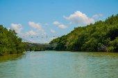 The bridge over the river. Dry mangrove trees. Rio Lagartos, Yucatan, Mexico