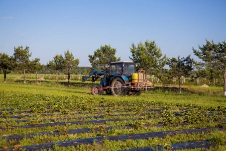 Agrikultura tractor cultivates the soil on the field