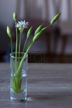 Photo for Close-up fragile white wild leek flowers in wineglass on kitchen background, selective focus - Royalty Free Image