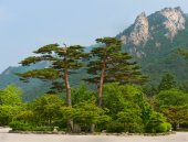 famous pair pines - symbol of Seoraksan National Park