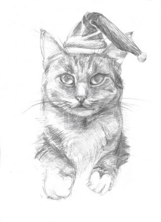 Sketch of a cat