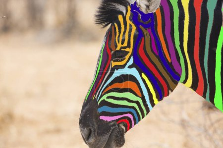 Head of multi colored zebra