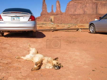 The Dog in the background Monument Valley.