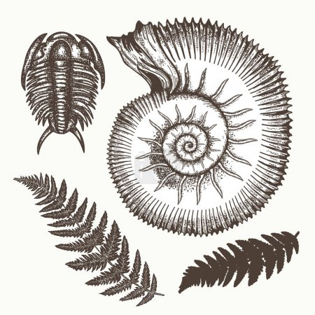 Illustration for Archeology and paleontology. Prehistoric art. Most ancient minerals Ancient ammonites fern, trilobite hand drawn vector. Great ammonite shell archeology art - Royalty Free Image