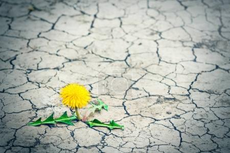 Photo pour Un petit arbre traverse le trottoir. Le germe vert d'une plante passe à travers un asphalte fissuré. Concept : n'abandonnez pas quoi qu'il arrive, rien n'est impossible. Santé, médecine, cosmétique . - image libre de droit