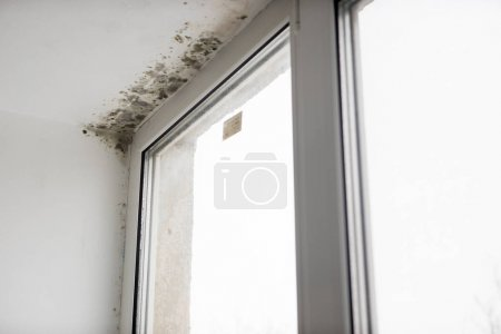 Mold in the corner of the window in bathroom
