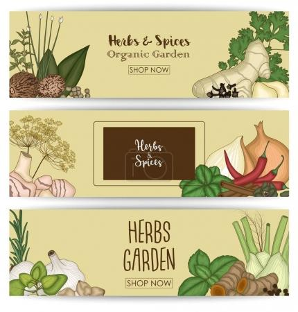Horizontal banner set with spices and herbs