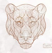 Patterned head of the lioness