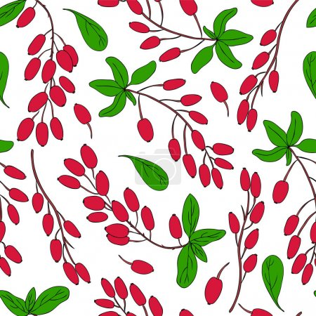 Seamless pattern, Barberry hand drawn branch vector sketch isolated on white background, colorful berry, Natural spicy herbs, cooking ingredient for design package tea, cosmetic, medicine, fabric