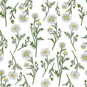 Chamomile wild field flower isolated on white background botanical hand drawn daisy sketch vector doodle illustration seamless pattern for design package tea cosmetic medicine textile fabric