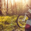 Bicycle and backpack in the forest in the forest a...