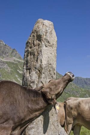 Photo pour Roche semblable à un phallus dans une haute vallée de Silvretta qui est souvent utilisée par les vaches comme une brosse à gratter - image libre de droit