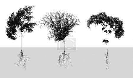 Black naturalistic cereals with root system - vector illustration