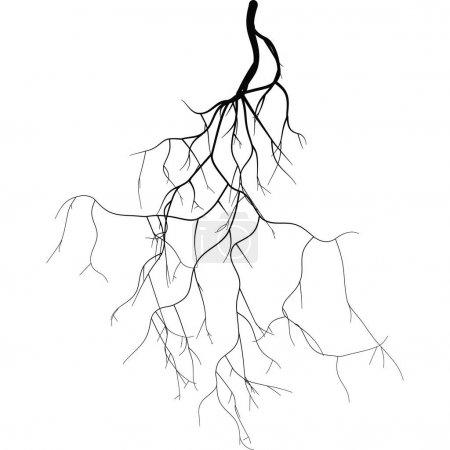 Black root system - vector set