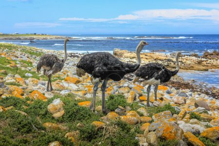Cape of Good Hope Natural Reserve