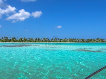 Photo pour Cocotiers sur le Canto de la Playa, île de Saona dans le parc national Est, République dominicaine. Canto de la Playa est l'un des circuits les plus populaires à partir de Bayahibe connu pour ses piscines naturelles . - image libre de droit