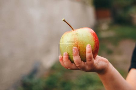 Photo pour A child holds a tasty apple - image libre de droit