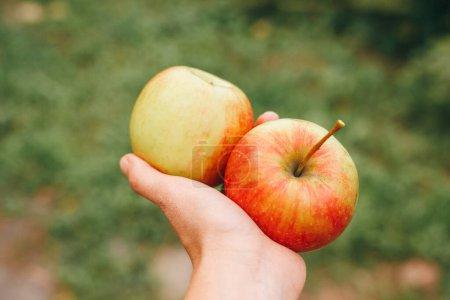 Photo pour Woman holds a tasty apple. Close up - image libre de droit