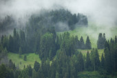A cloudy day over an Italian mountain forest