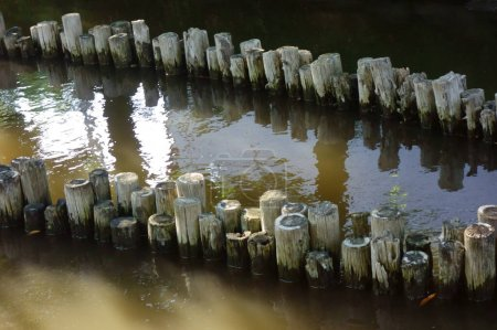 It seems that decayed piles are lined up in the po...