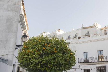 Photo pour Oranger devant les maisons du village blanc de Vejer de la Frontera en Andalousie - image libre de droit